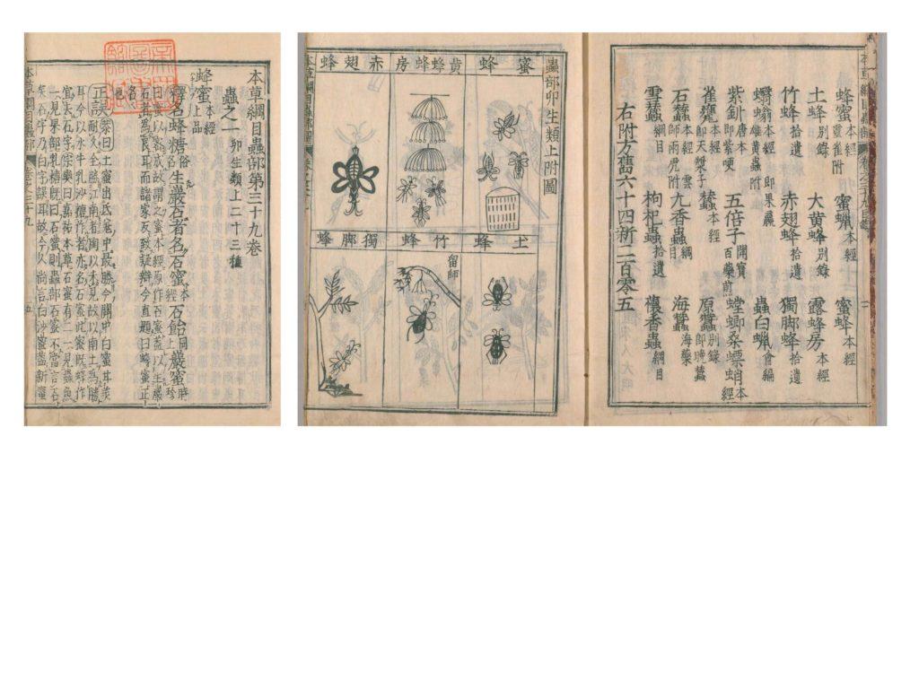 中国明代に出版された『本草綱目』